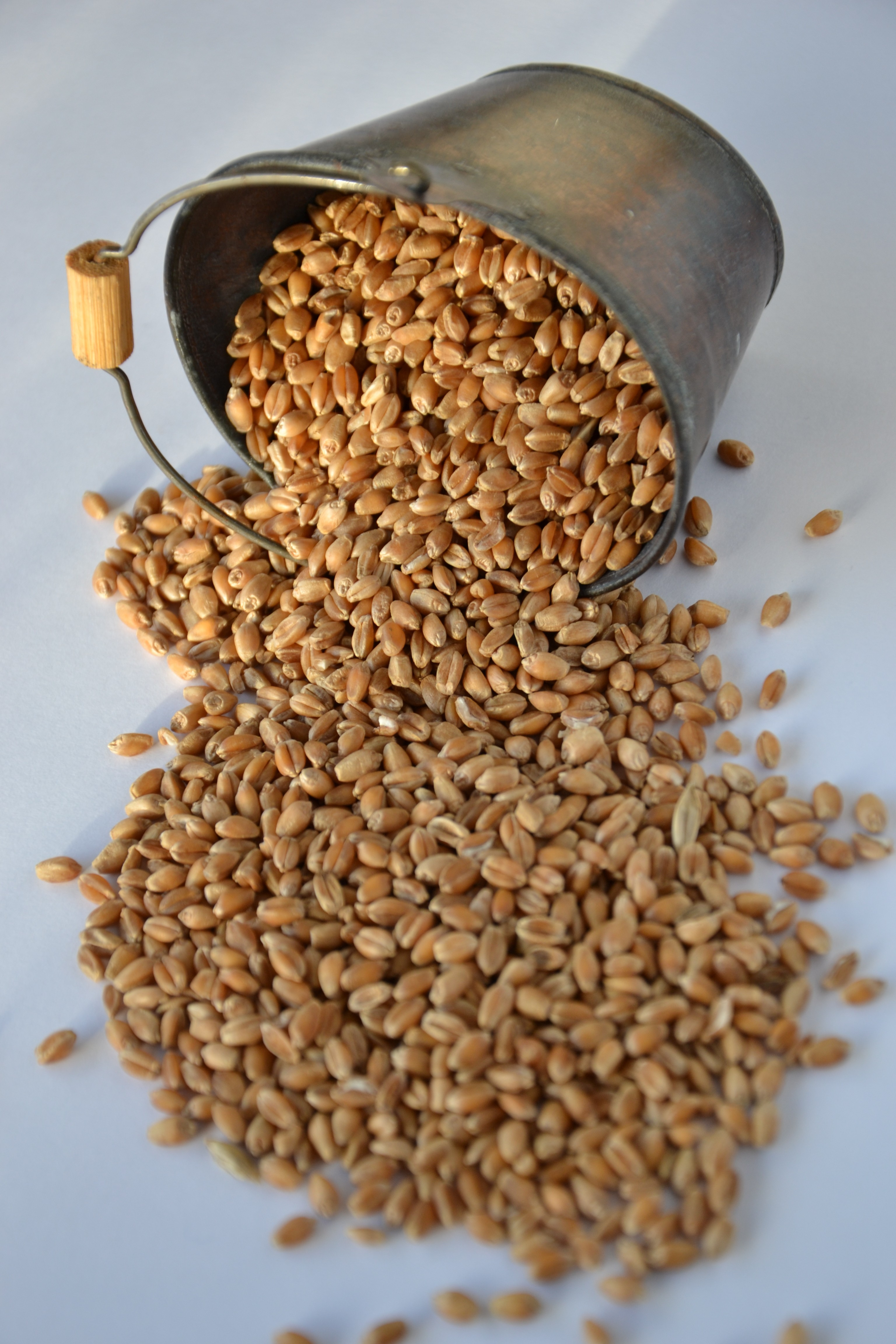 how to cook wheat berries quickly