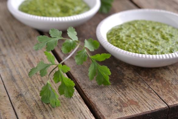 cilantro chutney - cilantro sprig